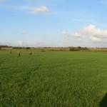 Hønse jagt i solskin og god vind